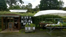 Herb Plants EXENDED AUTUMN SALE! Longley Kingborough Area Preview