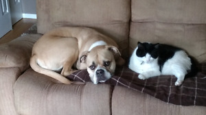 Reliable honest animal lover, dog sitting, and walking services