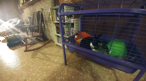 Large purple cage for small animal