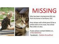Missing male cat, Carntyne G32 **REWARD**