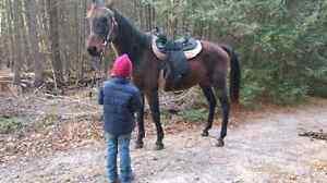 Great Christmas present! Good beginner horse!