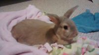 Lovable Bunny for Sale