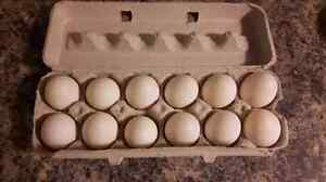 Fresh and Delicious Duck Eggs