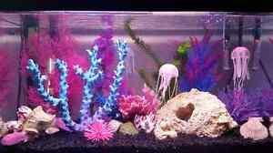 Aquarium ML 30g tout équipé, décoré et peuplé