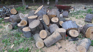 Mixed Not Split Fire Wood available
