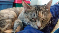 Tabby cat looking for her forever home