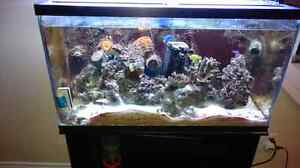Aquarium with stand and light (salt water T5HO)