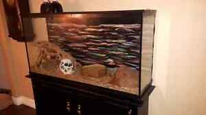 Ball python snake Kitchener / Waterloo Kitchener Area image 2