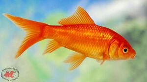 Recherche poissons gratuits svp, merci
