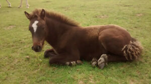 Baby Horse for Sale
