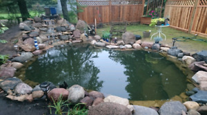 Koi Wanted For Expanded Pond