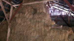 Small square bales of hay for sale