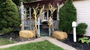 Straw bales/ corn stalks