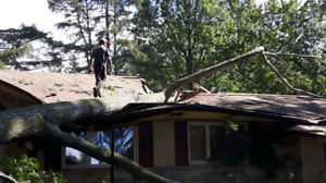 Tree felling / falling and removal services.