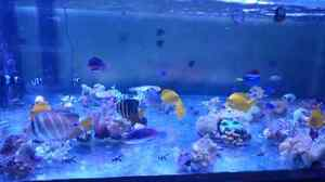 Salt water fish for sale!!!