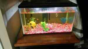 Fish with tank and accessories  Cornwall Ontario image 1