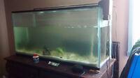 Aquarium 77 gallons