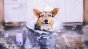 $10 Nail Trims and Pet Washes at Cole Harbour Pet Valu!