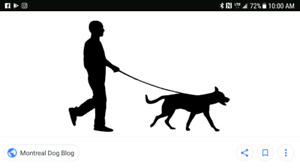 Checking on your pet or walking service