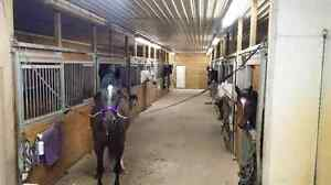 Equestrian Facility- Boarding offered