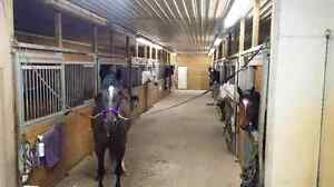 Equestrian Facility- Boarding offered Cambridge Kitchener Area image 1