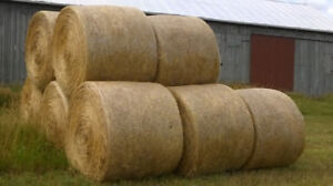 ORGANIC HAY for sale - 28 bales left