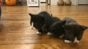 CUTE KITTENS FOR REHOMING!!!