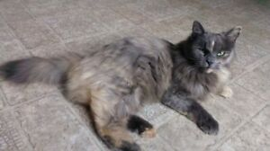 LOST FEMALE CAT FOUND, SANDYPOINT SHELBURNE AREA