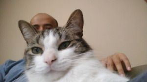 Well behaved and loving cat in need of a new home
