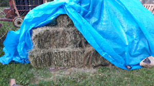 Small square hay bales for sale $5