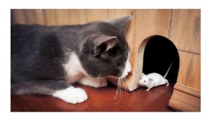 Wanted: Mouse-Catching Cat Wanted