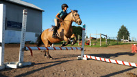 Horseback Riding Lessons - All Ages!