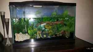 30g fish tank.  All included! 200$