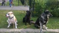 MEILLEUR PENSION POUR CHIENS ET PLUS A LAVAL!!! DOG PARADISE!!!!