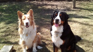 Dog walker/Pet nanny available + friendly & cheap rates Kitchener / Waterloo Kitchener Area image 1