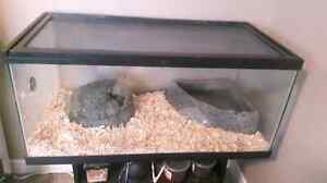 Pin stripe ball python and tank for sale