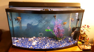 49 Gallon Bow Front Fish Tank/Accessories