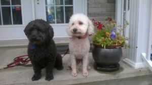 MAISON PRIVEE/PENSION CHIENS/PRIVATE HOME DOG BOARDING AND MORE!
