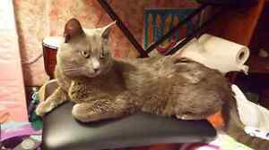 Lovable Male Cat to Forever Home!