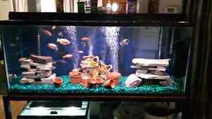 125 gallon fish tank with everything