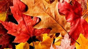 Contact John Wright's Lawn Services for LEAF REMOVAL Sarnia Sarnia Area image 5