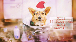 Nail Trims, Dog Washes AND Santa Pics @ Pet Valu Cole Harbour
