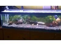 4 foot fish tank and fluval 4 external filter