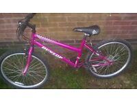 Pink Dunlop sport mountain bike