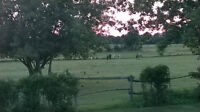 6 Acre Cute Hobby Farm! Minutes to Picton
