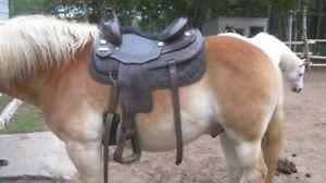 selle western pour cheval de trait