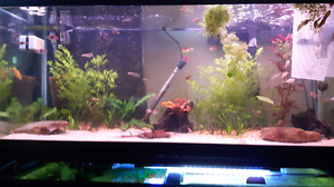 Looking for tetras, snails, shrimp, crayfish