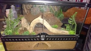 Tarantula and terrarium