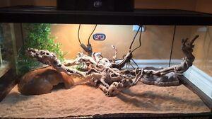 Terrarium/reptiles/dragon barbue.