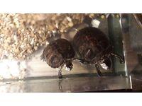 2 x Turtles